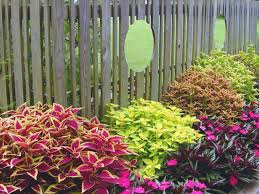 Outdoor Potted Plants Full Sun by Coleus Basics Hgtv