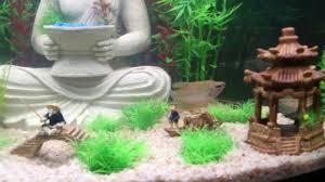 buddha aquarium