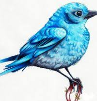 bluebird tattoos birds tattoo design gallery