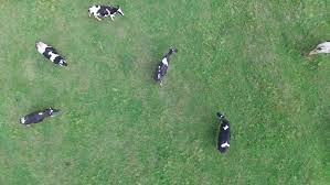 top view of people resting in the spring park and making barbecue