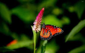 wallpapers of glitter butterflies orange butterfly 2 wallpaper animal wallpapers 33386