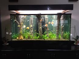 Cuisine Modern Aquarium Ideas And Design For Bedroom Space Modern