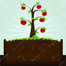 tomato tree and compost u2014 stock vector drical 71569517