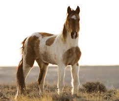 mustang horse wild mustang mustang horse and animal
