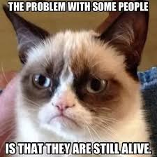 Frown Cat Meme - what are the funniest grumpy cat memes quora