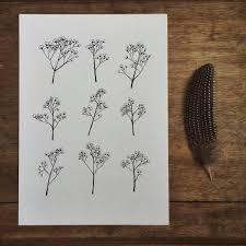Baby S Breath Flower Gypsophila Baby U0027s Breath Flower Illustration A4 Print