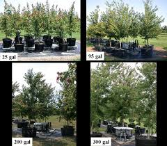 tree water use landscape trees how to quantify tree water use