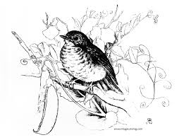 robin greyscale a free vintage coloring page