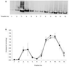 stearoyl coa desaturase 1 is a key determinant of membrane lipid