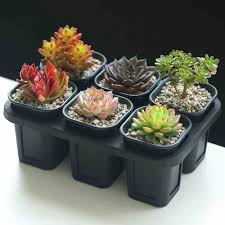 Cactus Planters by Popular 6 Planter Buy Cheap 6 Planter Lots From China 6 Planter