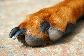 of the paws in dogs symptoms causes diagnosis treatment