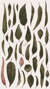 aust native plants natalie ryan