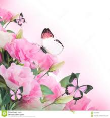 roses and butterfly floral background stock image image of
