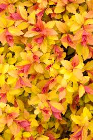 in fall 66 best fall plants images on pinterest landscaping ideas fall