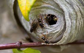 Bee Deterrent For Patio How To Wasp Proof Your Backyard For Outdoor Summer Living