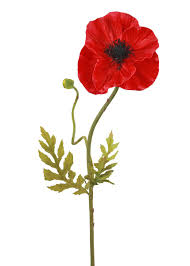 poppies flowers poppy stem real touch wedding flowers afloral