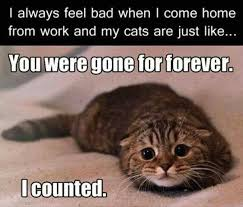 Mad Kitty Meme - you were gone forever i counted giantgag