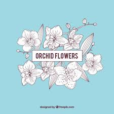 Blue Orchid Flower Blue Orchid Flowers Frame Vector Free Download