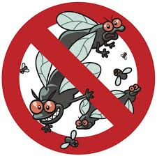 why house flies are dangerous and how to get rid of them brody