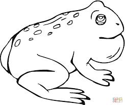 imagenes de un sapo para dibujar faciles dibujos de sapos para colorear páginas para imprimir y colorear gratis