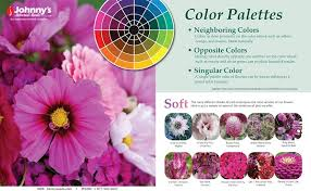 opposite color of pink gardening new plants and ideas for march 2013 the old farmer u0027s
