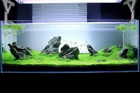 Aquascape Tank How Create An Iwagumi Aquascape Aquarium Life Cyprus