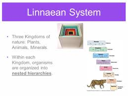 100 pdf biology classification taxonomy systematics review