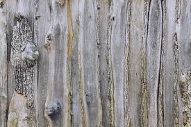 free images tree branch structure wood grain texture leaf
