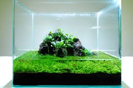 Takashi Amano Aquascaping Techniques Aquascaping Type