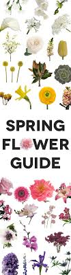wedding flowers guide flowers the complete guide a practical wedding a
