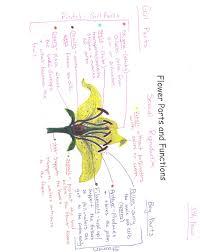 bms8thgradescience plants u0026 flower unit