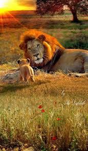 best 25 american lion ideas on pinterest prehistoric animals