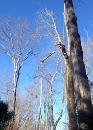 all american tree care in coventry ct tree removal trimming pruning