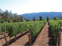 spring and early summer canopy management winemaking in the