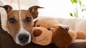 Pet About Pet Adoption Petfinder