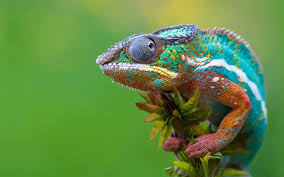 the meaning of the dream in which you saw chameleon