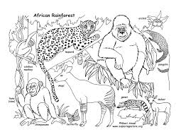 african rainforest animals coloring pages printable cat gekimoe