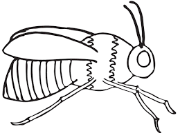 coloring pages draw a bee for honey glum me