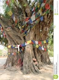 bodhi tree in lumbini buddha s birthplace stock image image of
