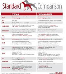 weimaraner vs afghan hound differences between the vizsla and weimaraner infographic