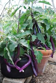 container vegetable garden landscape traditional with organic