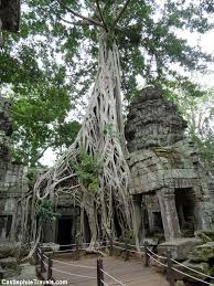 the trees of ta prohm castlephile travels