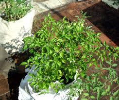 terrace turns garden in 18 000 houses some updates u2026
