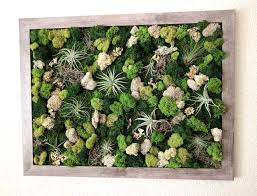 Vertical Wall Garden Plants by Diy Large Framed Vertical Wall Garden Kit With Ten Air Plants