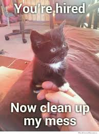 Clean Cat Memes - you re hired now clean up my mess weknowmemes