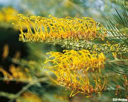 Australian Garden Flowers by Gardening Australia Downloads