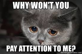 Pay Attention To Me Meme - why won t you pay attention to me sadcat meme generator