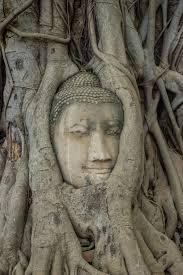 the headless buddhas in ayutthaya the burnt capital of siam