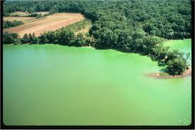 harmful algal blooms marine science