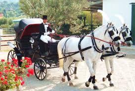 bianchi carrozze noleggio carrozza matrimonio calabria noleggio carrozza catanzaro